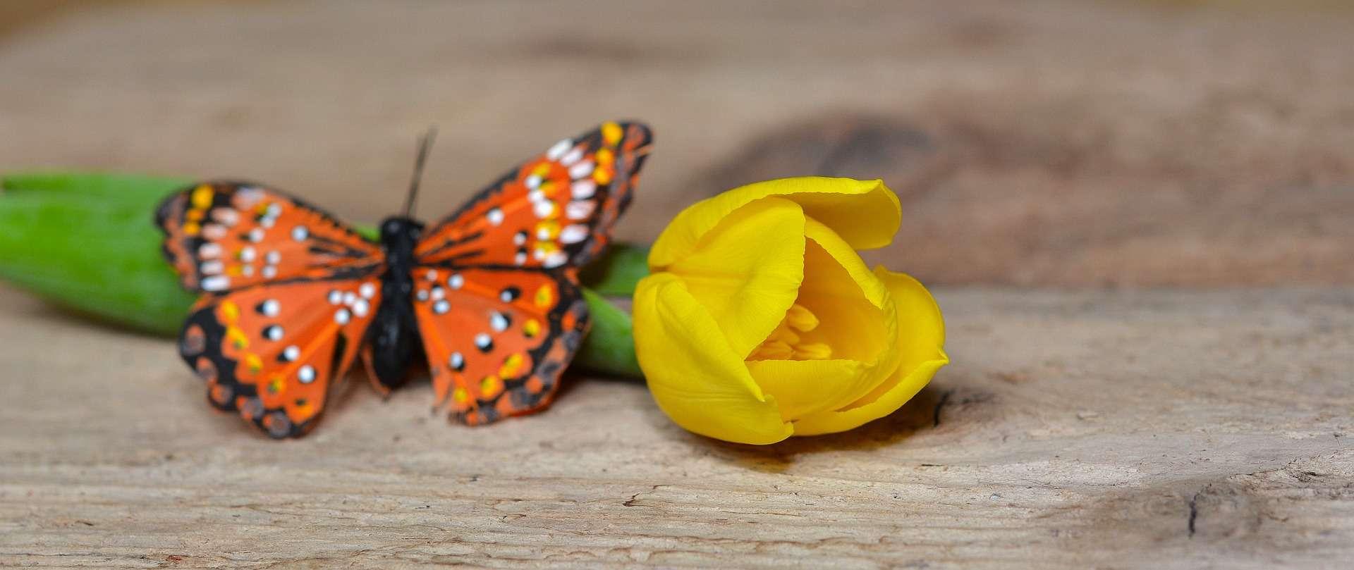 Butterflys & Tulips
